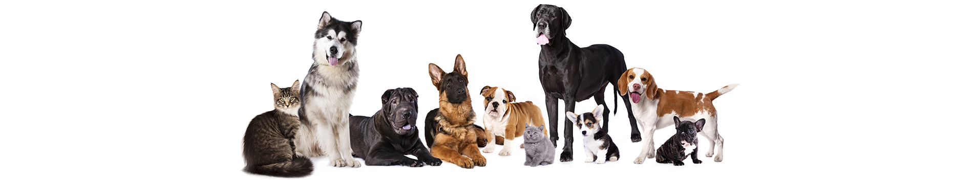 Pet grooming services pet love mobile pet grooming grooming services solutioingenieria Image collections